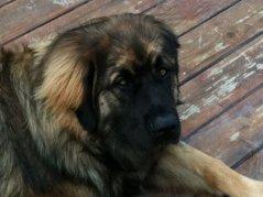 Dillon-Nov2011.jpg