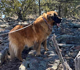 Hogan out hiking in New Mexico